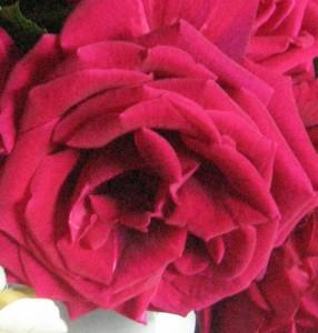 floare1